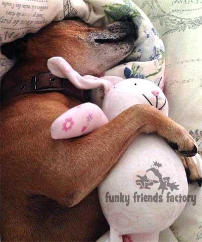 baby bunny dog toy