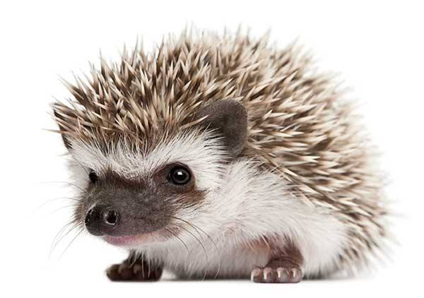 My New Hedgehog Stuffed Animal Toy Pattern Needs A Name Funky