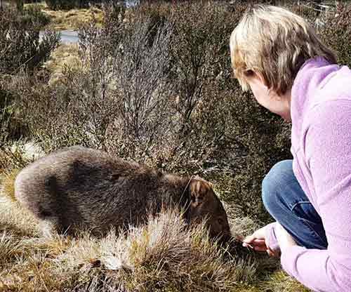 Pauline McArthur - Wombat in the wild