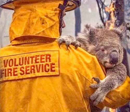 Links to legitimate organizations for donations to help the Australian bush-fire crisis.