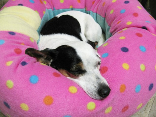 Cat and Dog Fleece Donut Bed INSTANT DOWNLOAD Sewing Pattern PDF