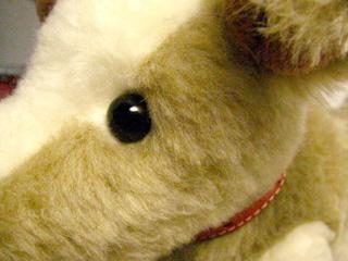 teddy bear eyeballs